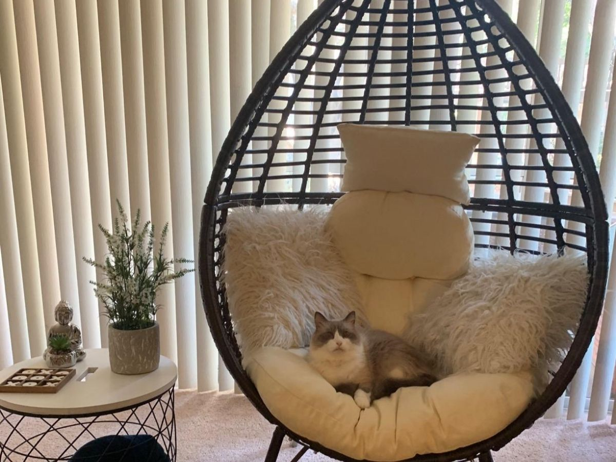 Christopher Knight Teardrop chair in living room with cushions, throw pillows, and a cat