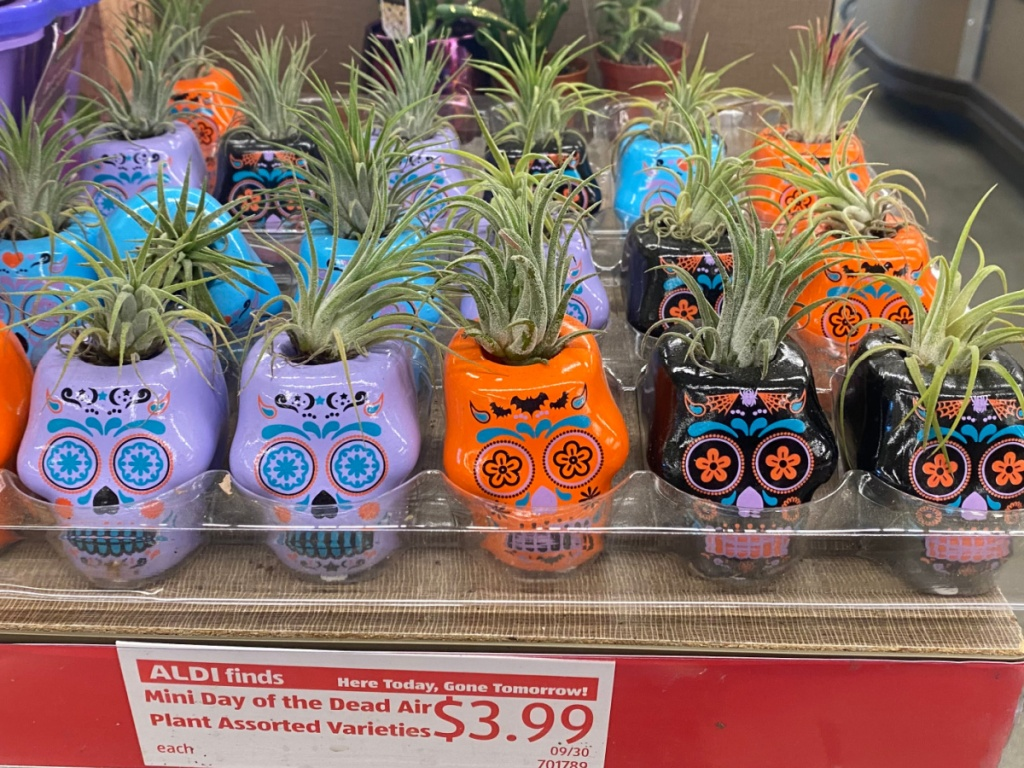 purple, black, and orange day of the dead air plants on store shelf