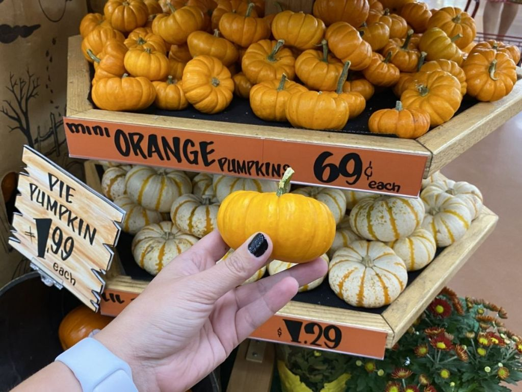 Mini Orange Pumpkin Trader Joe's