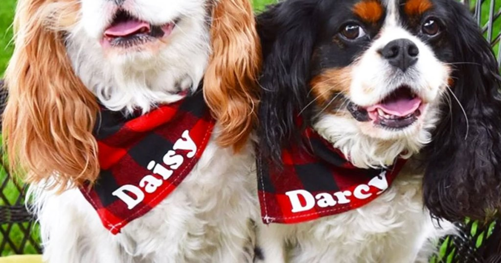 two dogs wearing black and red plaid bandanas with their names on them