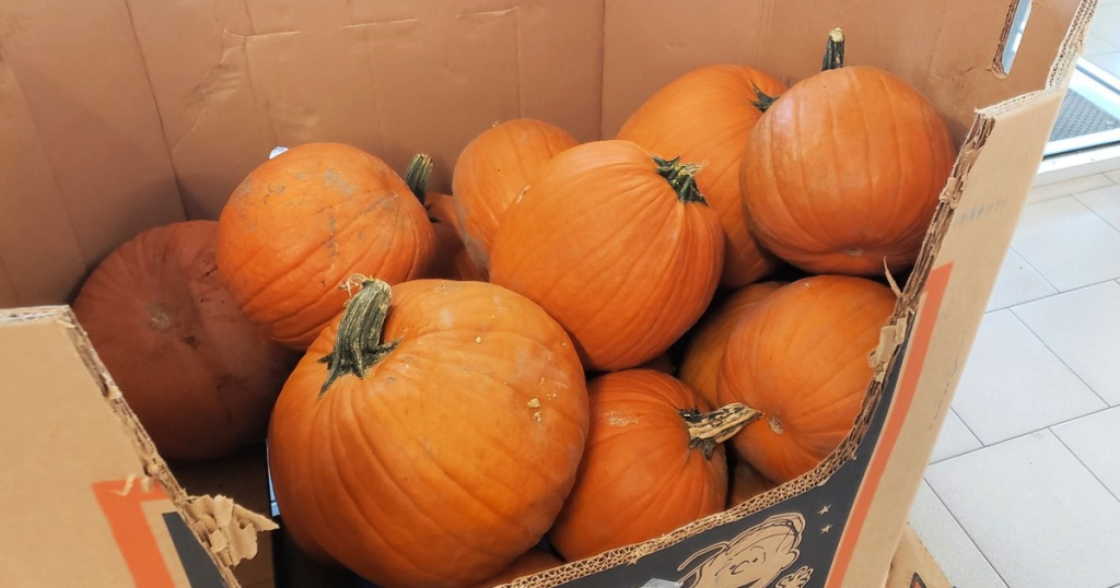 Pumpkins on display at ALDI