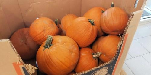 GO! Fall Pumpkins Only $2.99 at ALDI