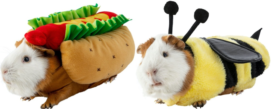 guinea pig in hot dog costume and guinea pig in bee costume