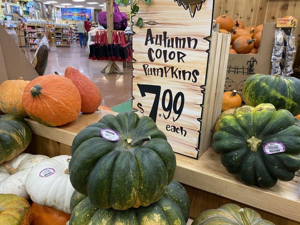 Trader Joe's Autumn Pumpkin Display