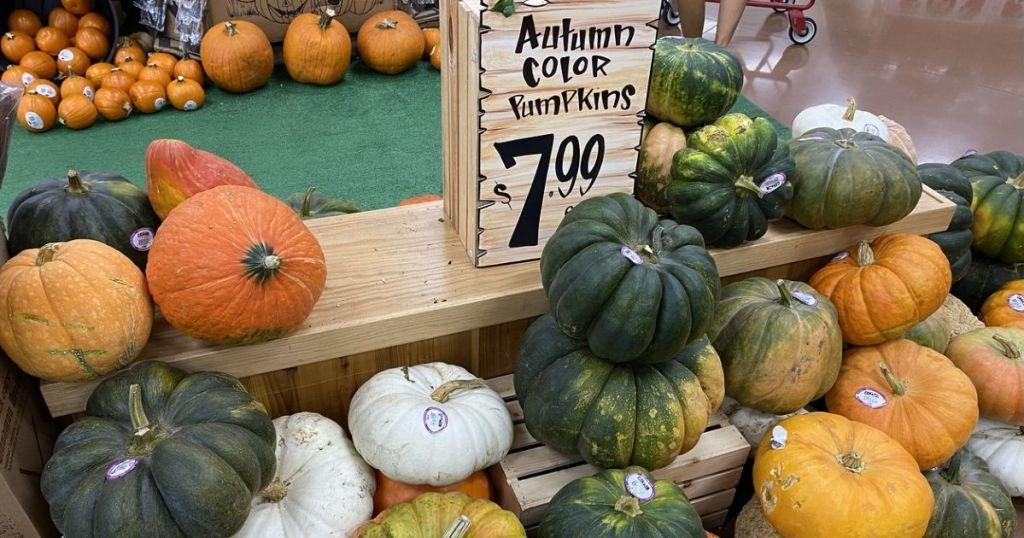 Trader Joe's Autumn Color Pumpkins