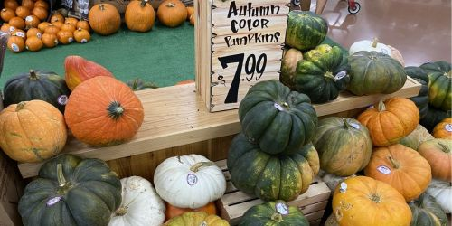 Trader Joe's Has Pumpkins of Every Size and Color & Priced as Low as 69¢