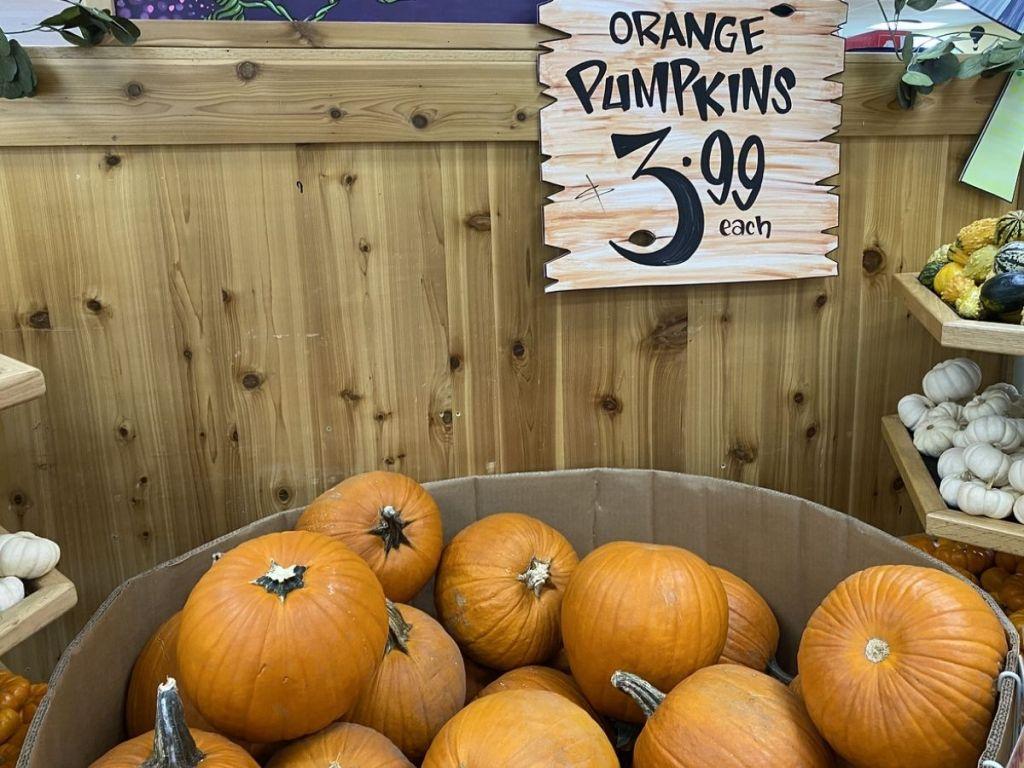 Orange Pumpkins at Trader Joe's for $3.99