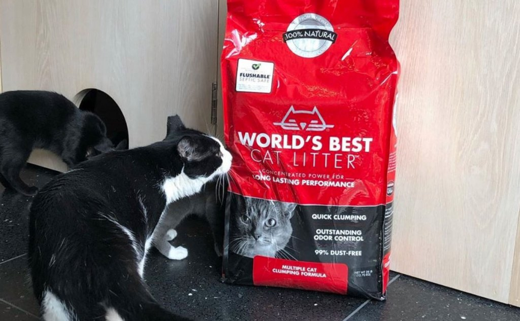 black and white cat sniffing a red bag of World's Best Cat Litter