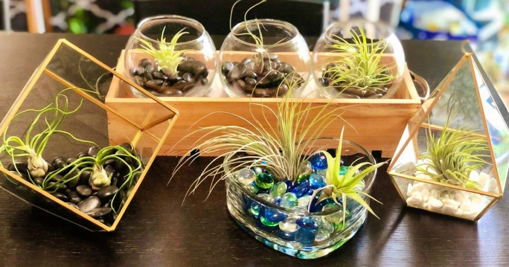 air plants in cute platers on coffee table