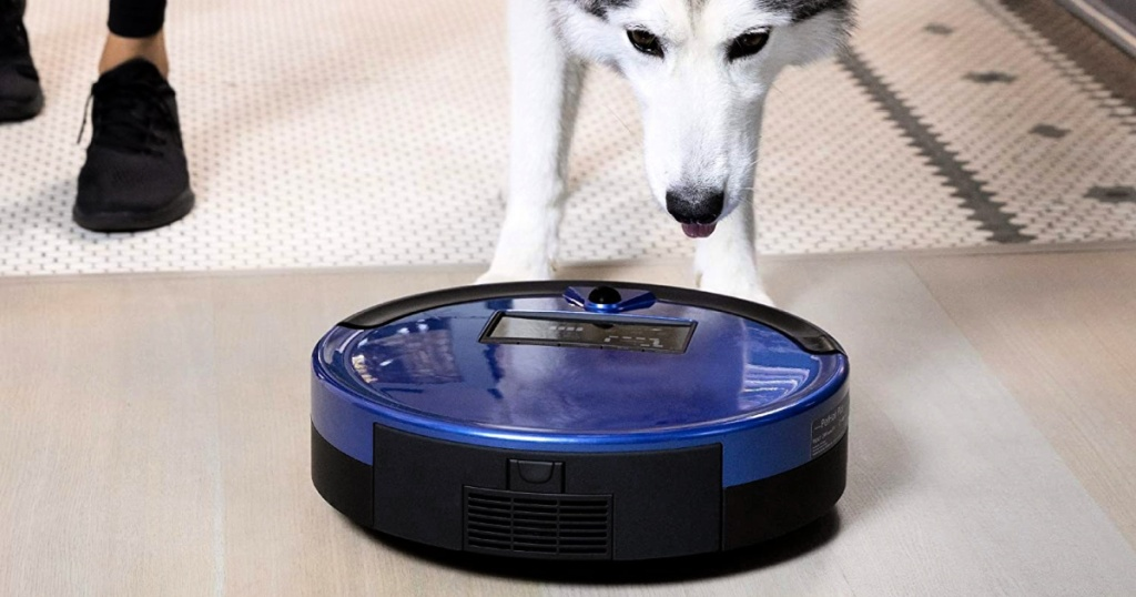 dog looking at a blue robotic vacuum cleaner