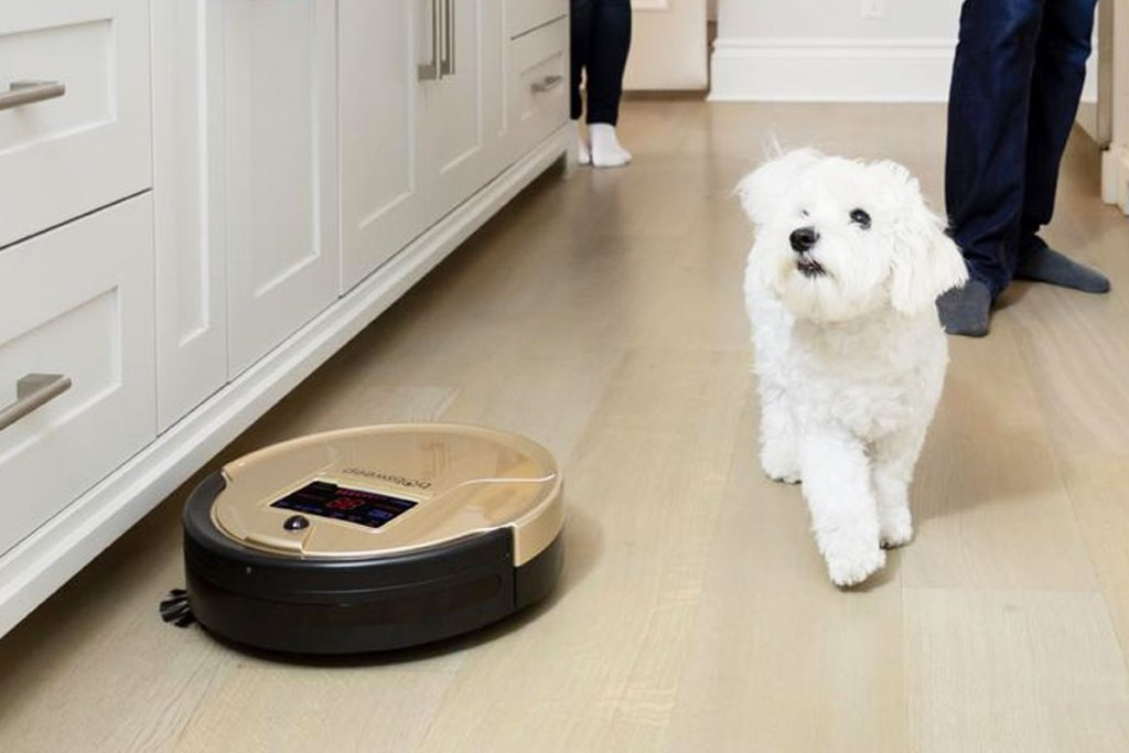 gold and black robotic vacuum cleaning kitchen floor next to small white dog