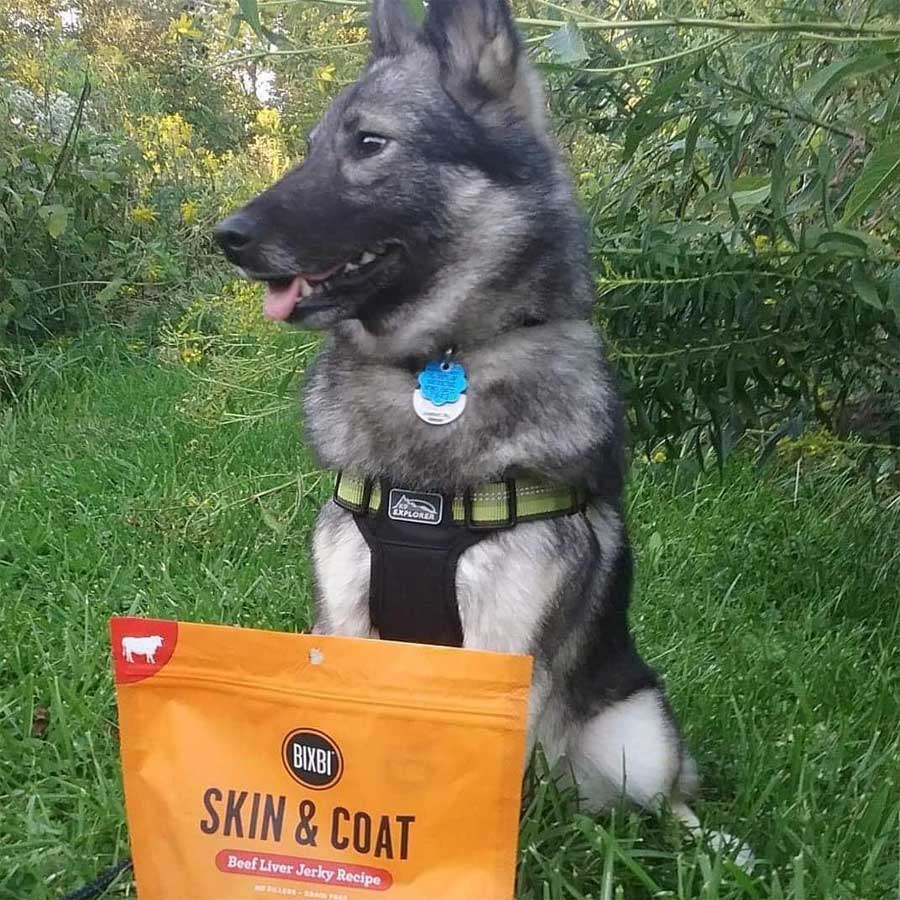 dog standing next to dog treats outside