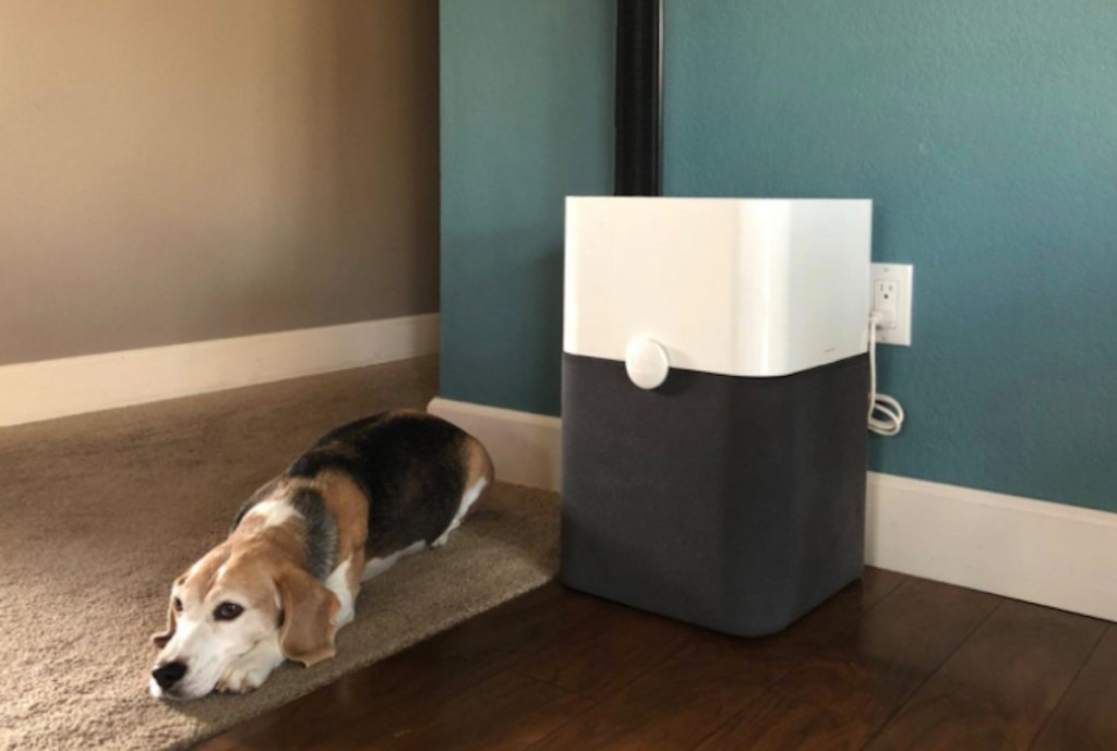 dog laying next to blueair air purifier