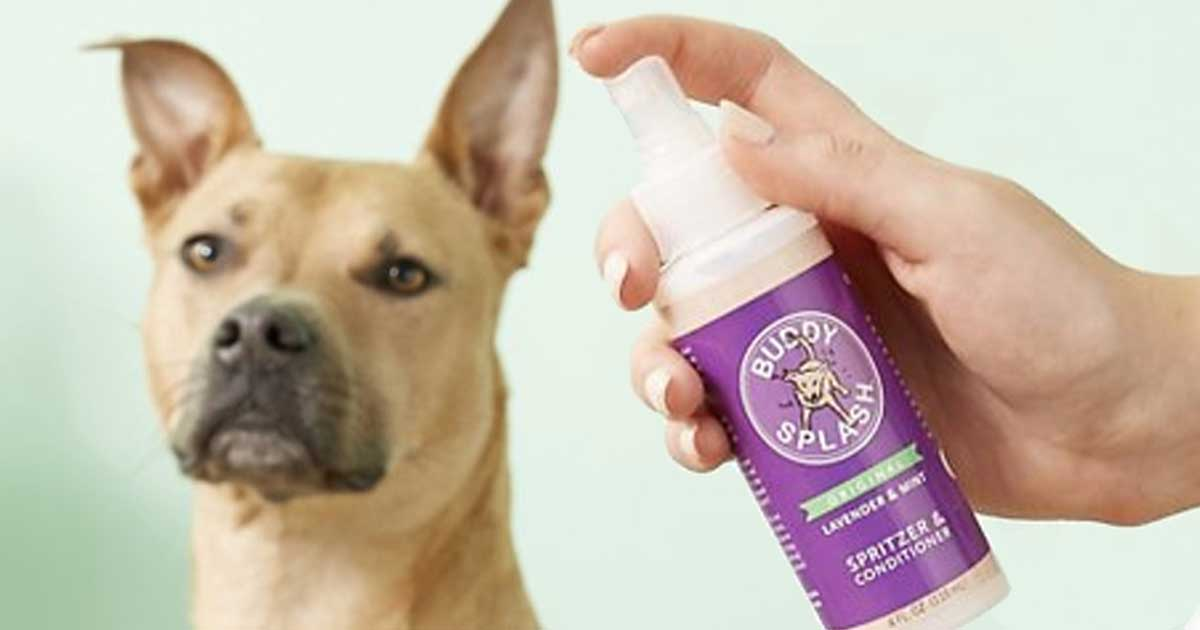 hand holding a spray bottle near a dog with its ears perked up