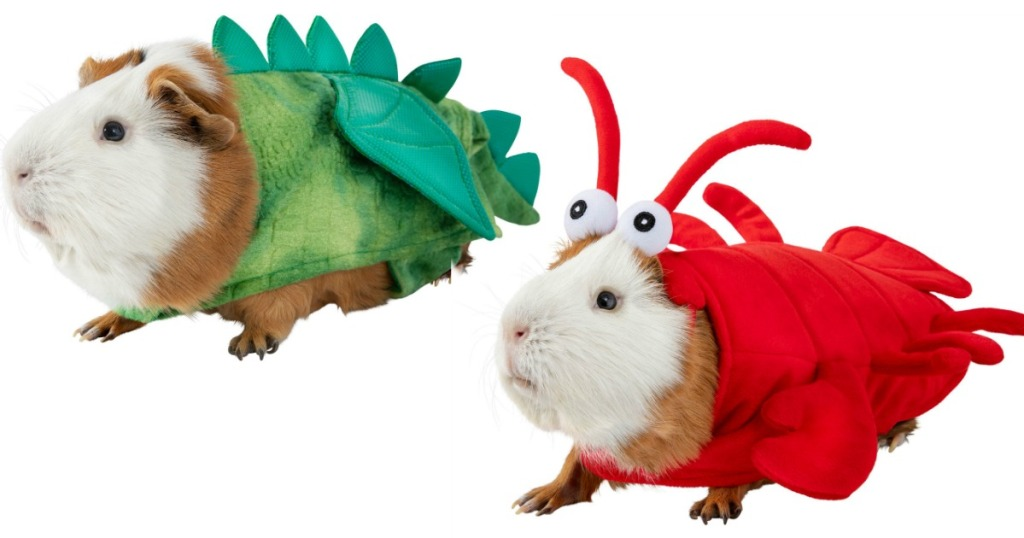guinea pigs wearing dragon and lobster halloween costumes