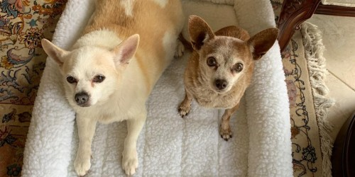 Aspen Pet Kennel Mats & Beds from $5.99 on Macy's (Regularly $22+)