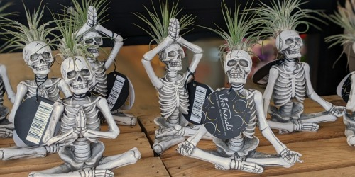Yoga Skeleton Namaste Air Plants are Back at Trader Joe's & They're Only $5.99