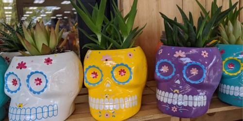Sugar Skull Planters w/ Live Succulents Just $3.99 at Trader Joe's