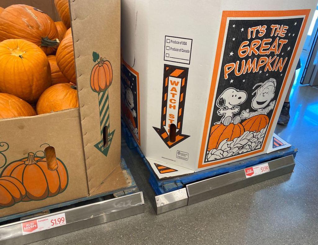 ALDI Pumpkin Boxes