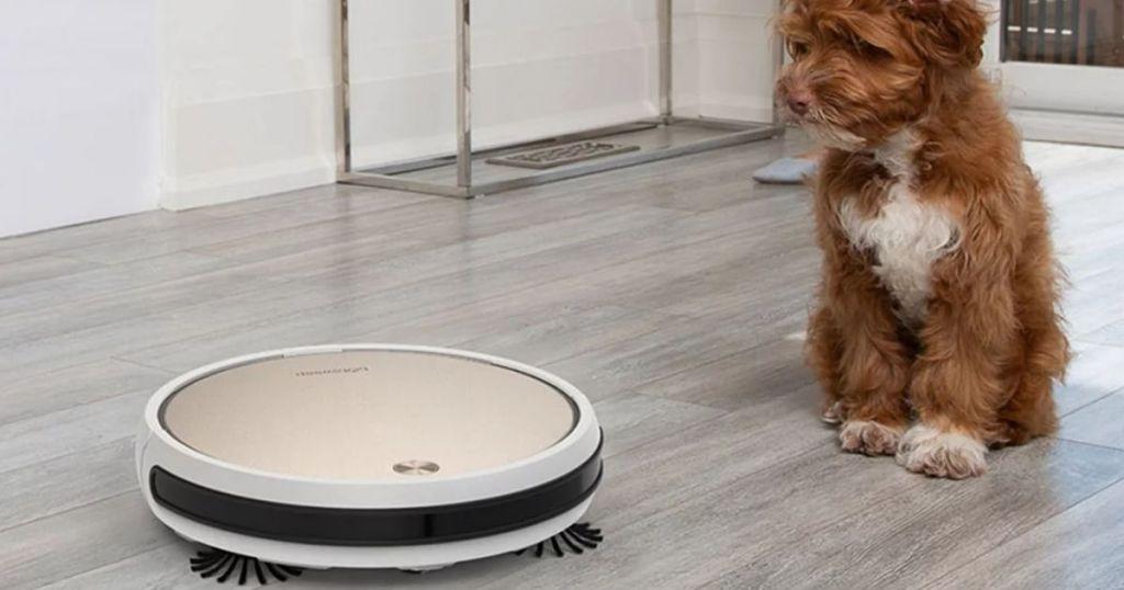 dog looking at a robot vacuum