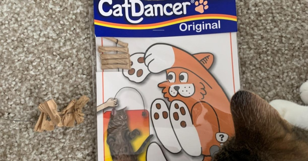 cat and cat dancer toy on carpet