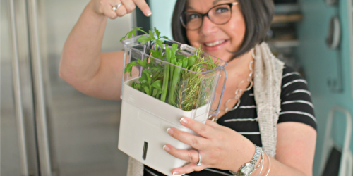 Here are 2 Easy Ways to Keep Herbs Fresh for Over 3 Weeks in the Fridge!