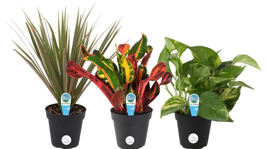 three plants in pots
