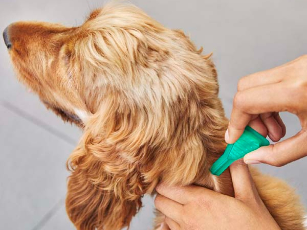 person using flea and tick treatment on dog