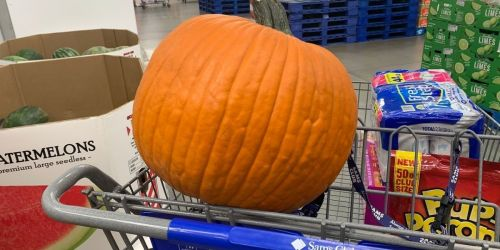 Large 20-Pound Pumpkins Only $5.99 at Sam's Club or Costco
