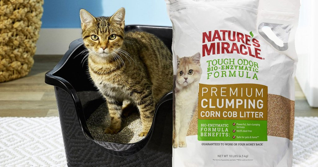 cat in black litter box with white bag of nature's miracle cat litter in front