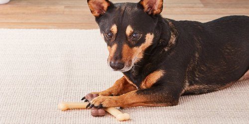 Nylabone Dog Chew Variety 3-Pack Just $2.30 Shipped on Amazon (Regularly $9)