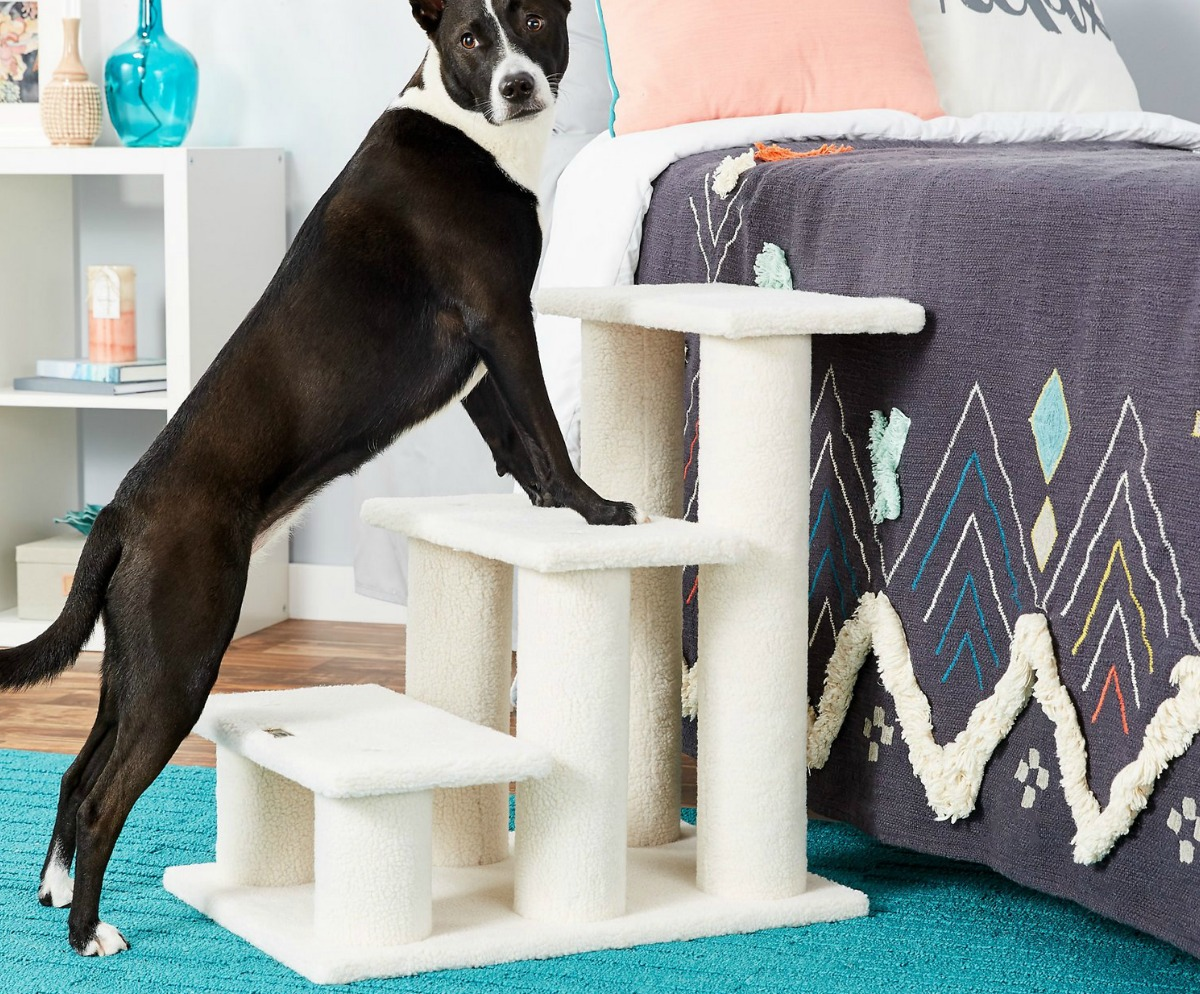 Dog standing on white pet steps leading up to a bed