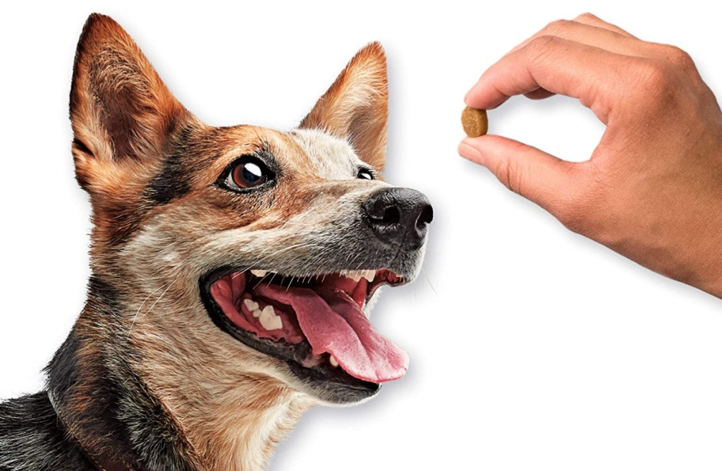 dog facing a treat in a person hand