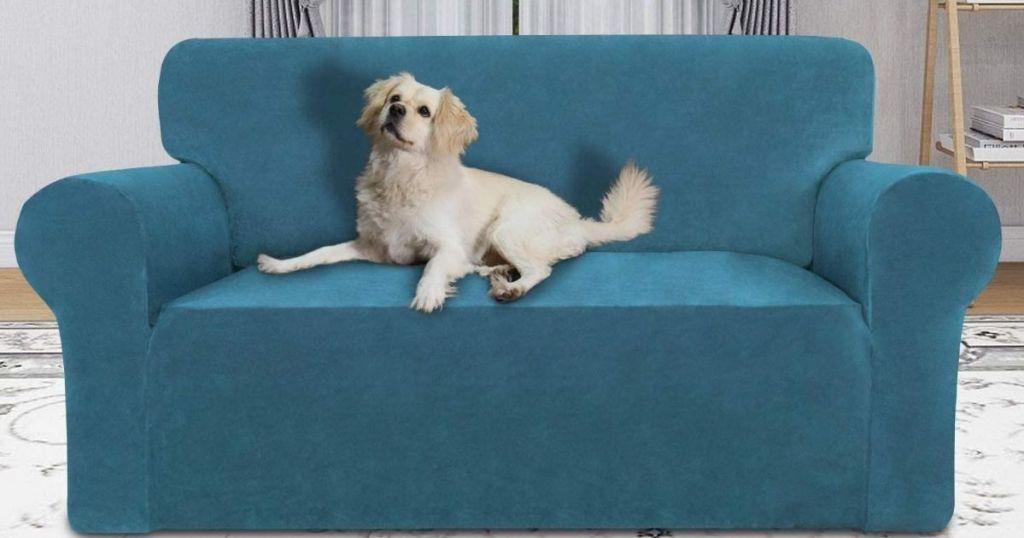 Dog on couch with velvet slipcover