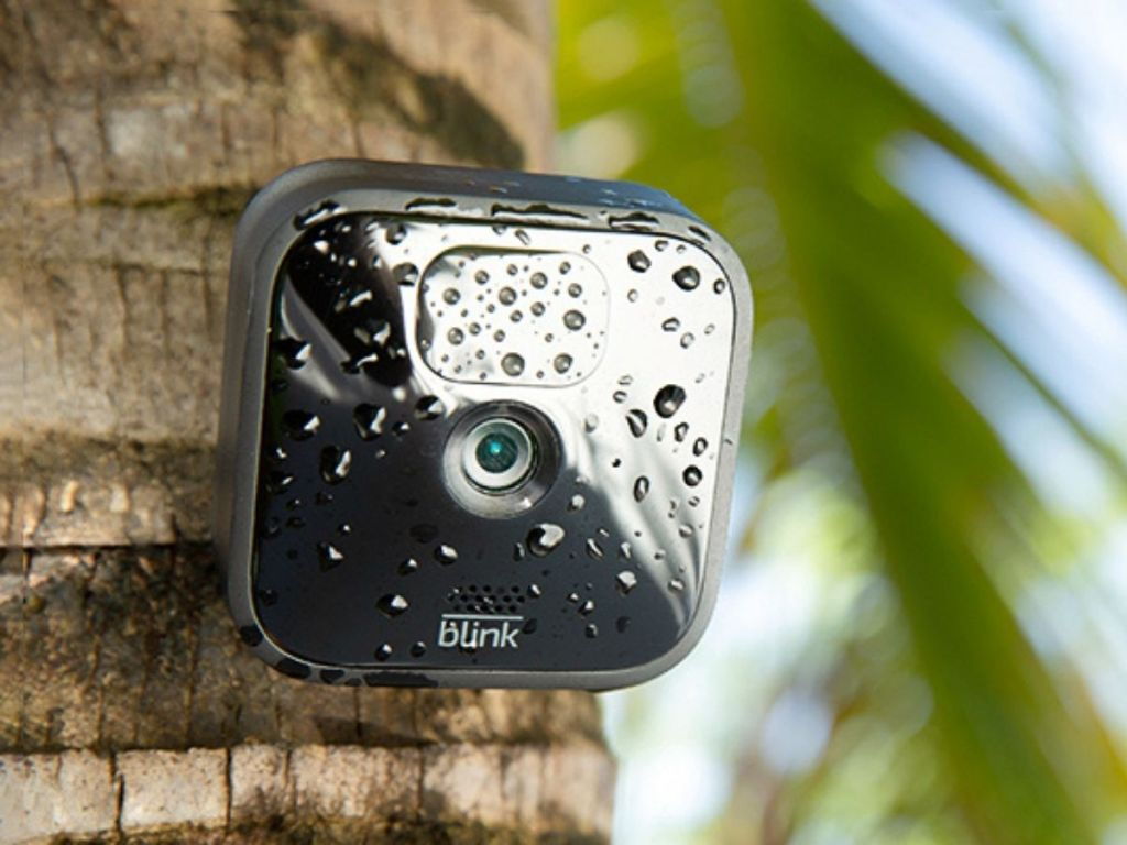 blink security camera mounted on a tree