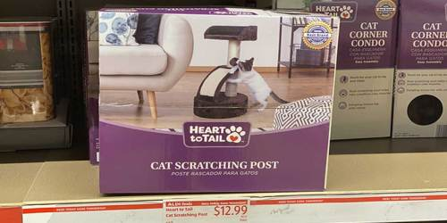 Cat Owners! ALDI Has Some Must-Buy Deals for Your Feline Friends