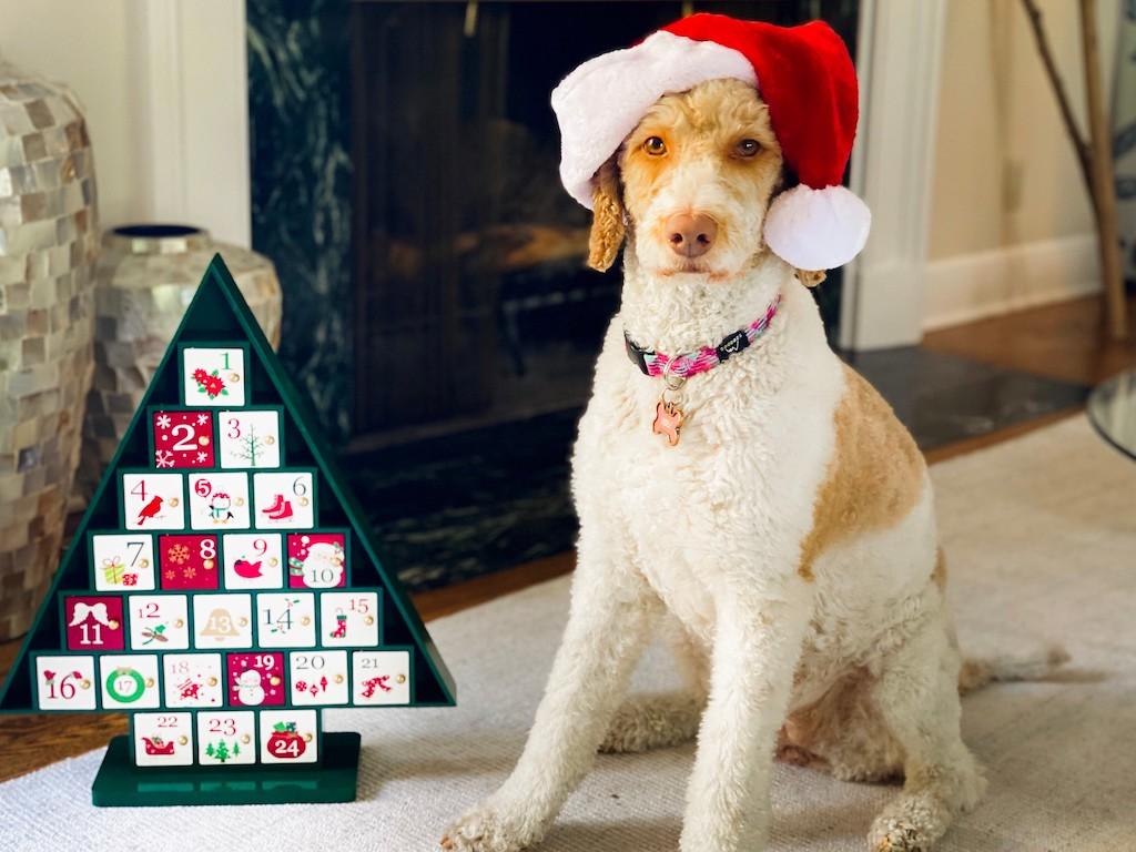 dog with Santa hat sitting by Advent calendar