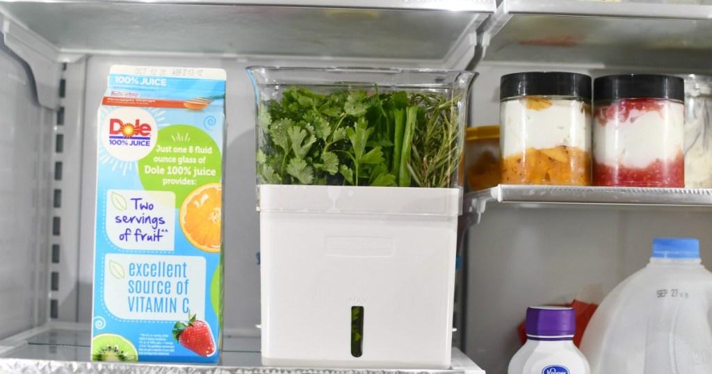 herb keeper in the fridge