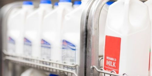 GO! Kroger Half Gallon of Milk Only 77¢ | Rare Savings