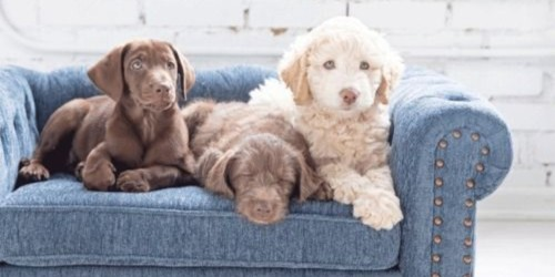 La-Z-Boy Now Sells Dog Beds That Look Like Furniture