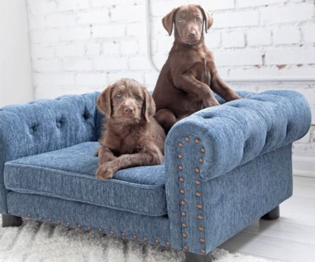 La Z Boy Now Sells Dog Beds That Look Like Furniture Hip2save
