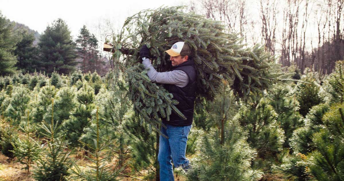 man delivering a christmas tree