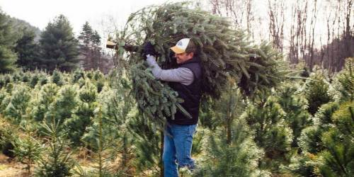 Lowe's Offers FREE Christmas Tree Delivery This Holiday Season