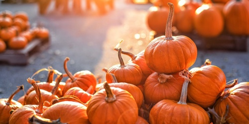 Trick or Treat at Lowe's & Score FREE Treats & Kid-Sized Pumpkins | Register Now