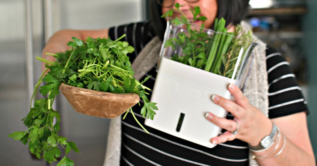 woman holding fresh herbs and an herb keeper