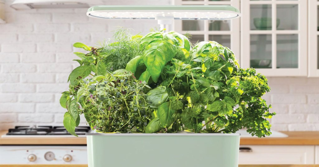 light green indoor garden planter with light on top growing various types of herbs in a kitchen