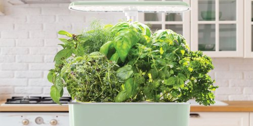 AeroGarden Indoor Garden & Seed Pod Kit Just $79.99 Shipped on Macys.com (Regularly $164)