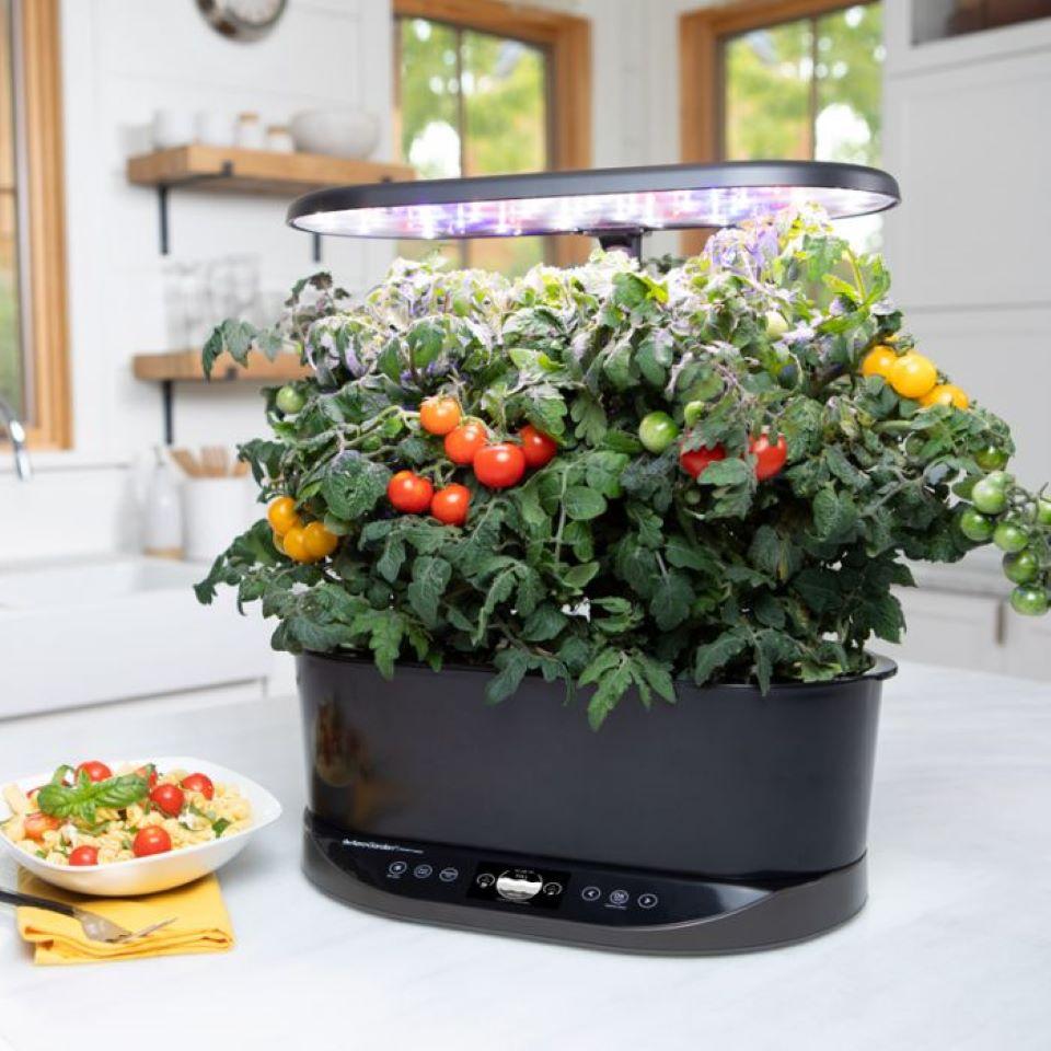 Aerogarden dalam ruangan dengan tanaman tomat