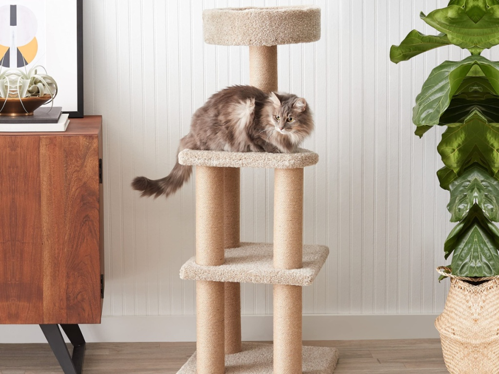 cat sitting on top of a large cat scratching post