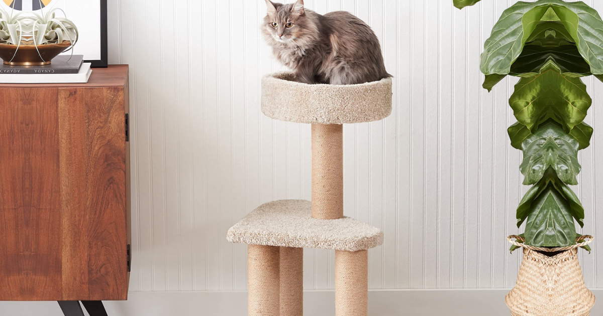 cat laying on top of a cat scratching post